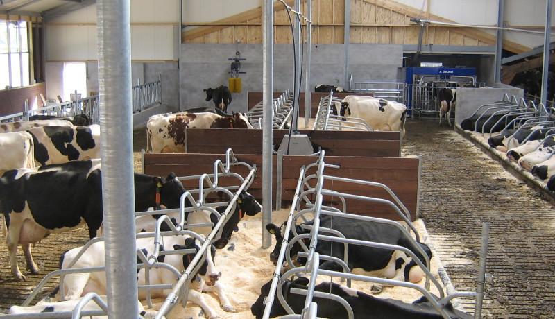 Exel Stallenbouw: Dogger Beerzerveld 2 aanpassen stal