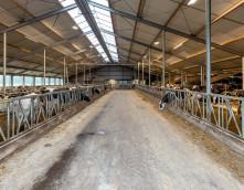 Exel: Stallenbouw Kempers-Dalfsen vernieuwbouw stal