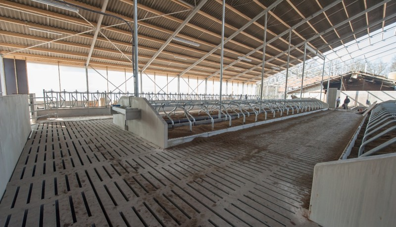 ligboxenstal rundveestal koeienstal betonroosters groen label nieuw over bestaand vernieuwbouw aanpassen