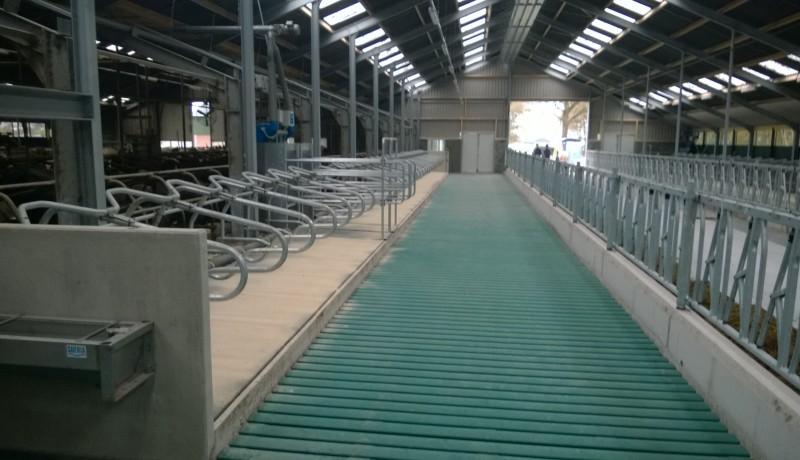 Exel Lemele Klaassen Dwingelo rundveestal groene vlag koeienstal stallenbouw oplevering voergang emissie arme vloer