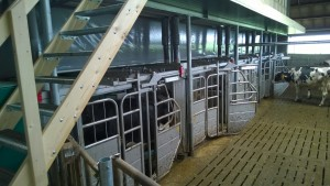 Plaatsen melkrobot in bestaande stal te Zeewolde