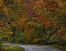 Herfstkleuren Lemelerberg